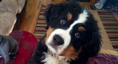 Pet Friendly Home Listing